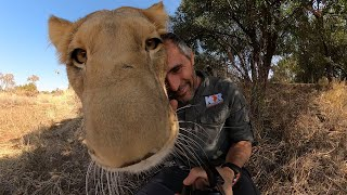 Thors Group - Through Their Eyes 360° | The Lion Whisperer