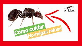 COMO CRIAR HORMIGAS EN CASA!! 🏠| *LA MEJOR MANERA* de CUIDAR tu REINA 💪!!| _AntMeet_