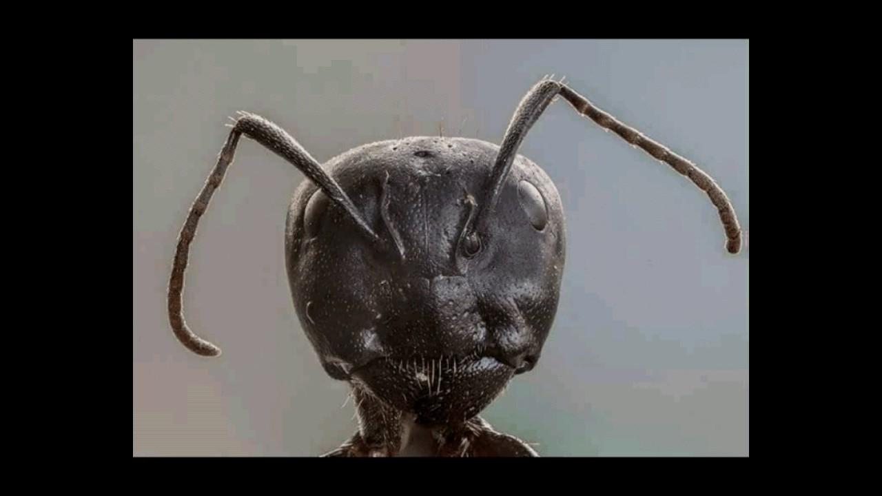 سبحان الله وجه النملة من قريب Youtube