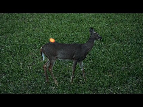 Deer Hunting - 38 Does in 3 Minutes
