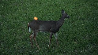 Gambar cover Deer Hunting - 38 Does in 3 Minutes