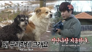 The reason why the Animal Farm PD saw the dogs and put down the camera
