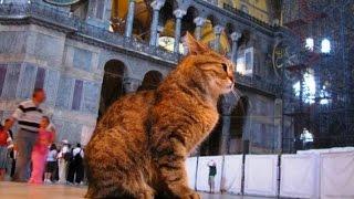 Cat in Masjid Al-Haram | MAKKAH - SUBHAANALLAH!!
