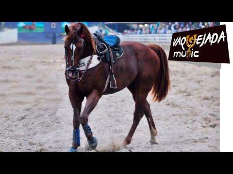 Mano Walter - Meu Cavalo é Show Papai (Vaquejada Music)