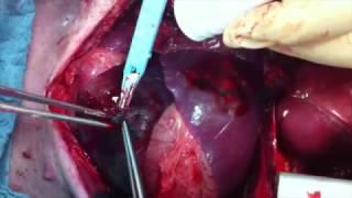 4DryField® von PlantTec - Operation am Schwein