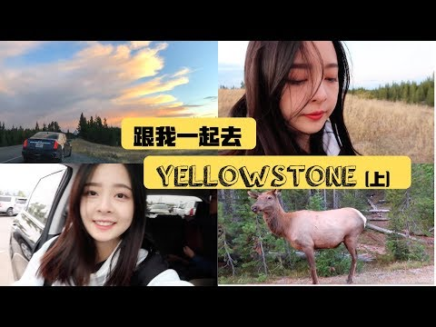 跟我一起去黄石国家公园吧 | Yellowstone Vlog | 看见野生动物! | 超美日落 | 中秋节的月亮好圆好美