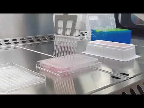 CELL2SPHERE: 3D CELL CULTURE SOLUTION