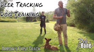 Deer Tracking Dog Training: How To Start Tracking with a Puppy