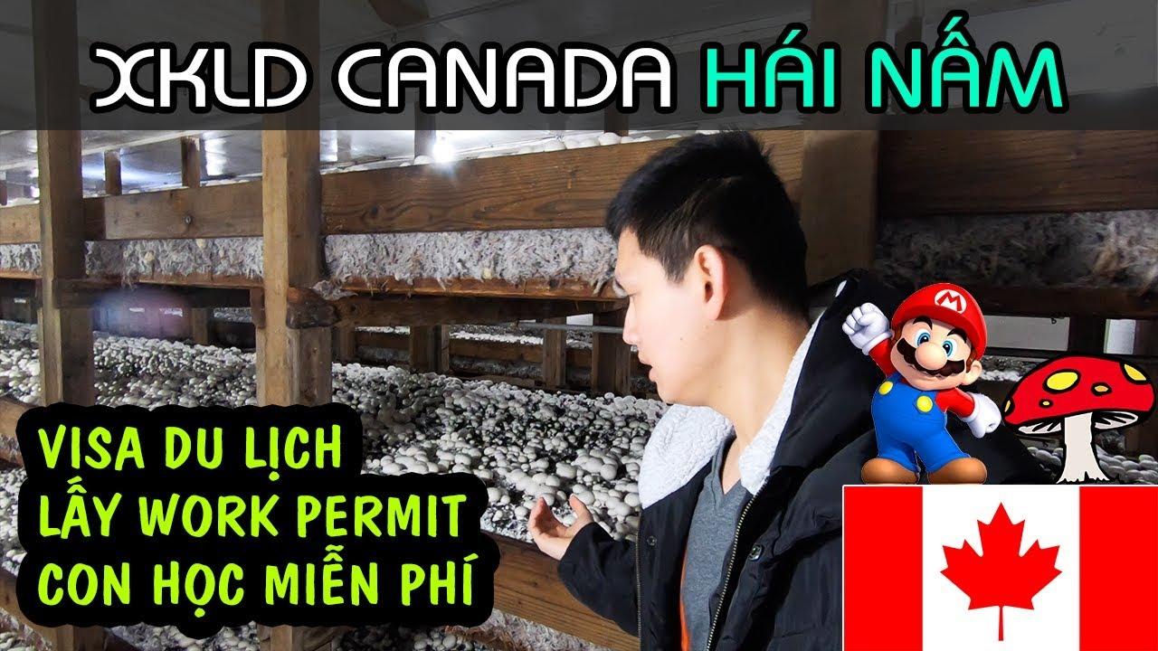 LAO ĐỘNG CANADA 2019: HÁI NẤM | VISA DU LỊCH LẤY WORK PERMIT, CON CÁI HỌC MIỄN PHÍ Ở CANADA