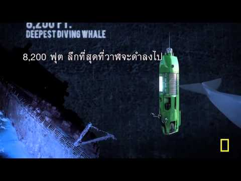 ตัวอย่างหนัง - DEEPSEA CHALLENGE 3D (Official Trailer Sub-Thai  )