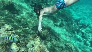Кораллы и рыбы в отеле Альбатрос Модерна Египет Шарм Эль Шейх