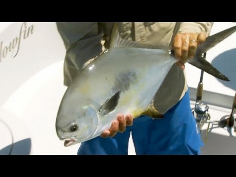 "Saltwater Experience: ""The Permit of Marathon"" Season 7 