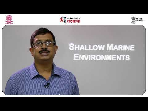 Clastic shallow marine environments  shoreface and shelf