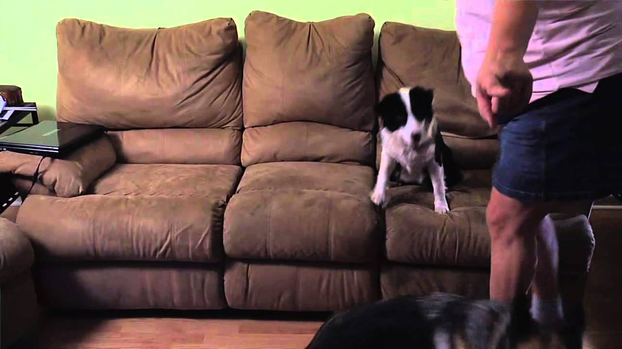 How to Stop the Dog From Jumping on the Sofa