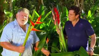 The Garden Gurus - Heliconia and Tropical Ginger