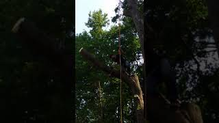 How to cut a large tree branch