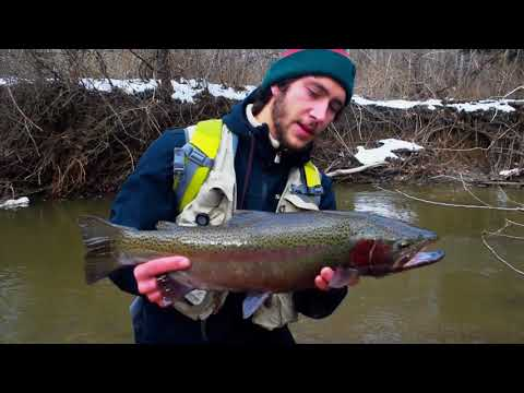 Erie Browns And Steelhead In December