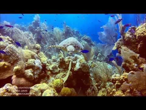 NO OFFSHORE OIL~ AQUARIUM MARINE LIFE HIGHLIGHTS