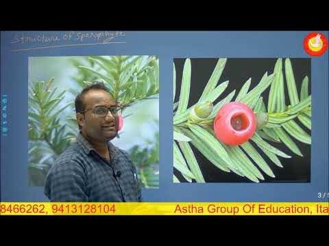 Lecture - 1 Taxus Plant   Morphology And Stem Anatomy