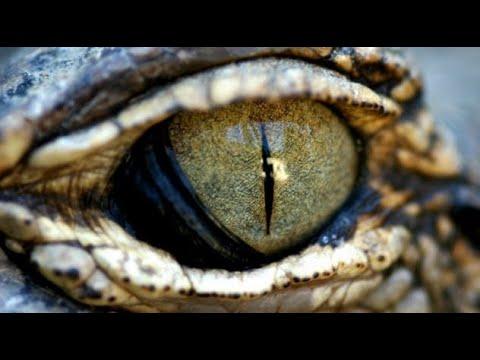 Multiple Eyewitness Testimonies of Draco Reptilians