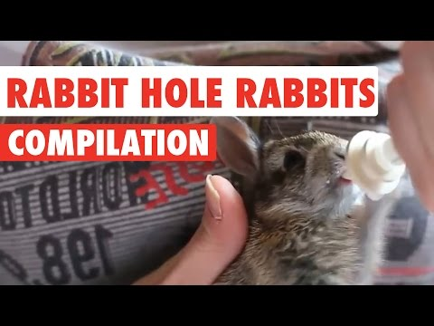 Rabbit Hole Rabbits Video Compilation 2017