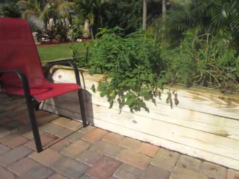 Raised bed gardening and horticultural therapy