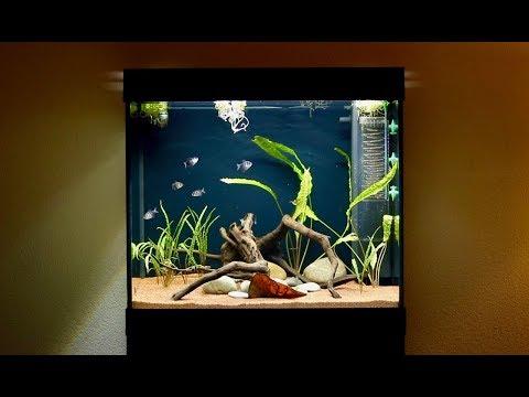 55 Gallon Black Skirt Tetra Fish Tank | Juwel Lido 200 LED