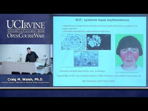 Biological Sciences M121. Immunology with Hematology. Lecture 24. Autoimmune Diseases.