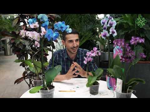 Para çiçeği çoğaltımı - (Yeşim/crassula/bereket çiçeği) nasıl çoğaltılır