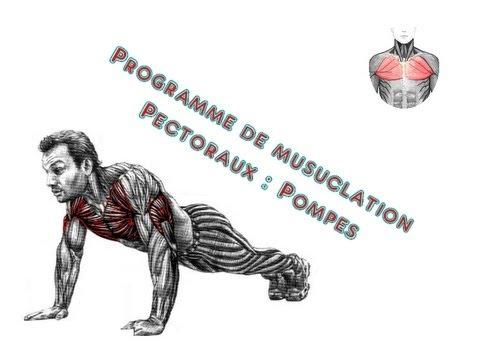 Programme musculation pectoraux youtube for Programme de musculation