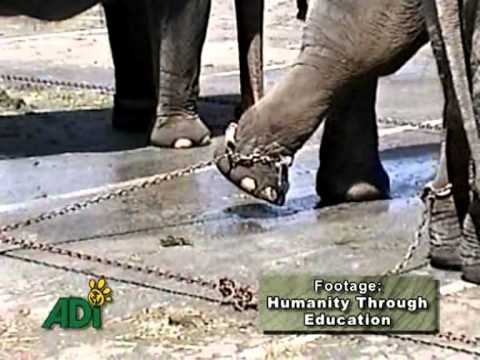 gli animali nel circo
