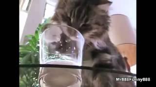 Коты и звуки ном-ном-ном ))