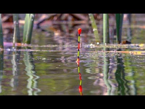 Поплавок! Нашел на болоте много карася! Ловля карася поплавочной удочкой!