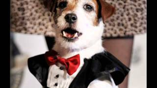 The Artist star Uggie cemented his position as Hollywood's top dog ...