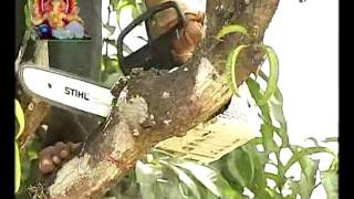 Video ' Resolution Of Old Unproductive Mango Tree '_' जुन्या अनुत्पादीत आंबा बागांचे पुनरुज्जीवन' download MP3, 3GP, MP4, WEBM, AVI, FLV Agustus 2018