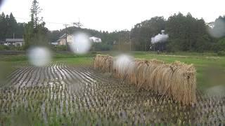 191027 東武鬼怒川線 7 新高徳-大桑 SL大樹 大雨
