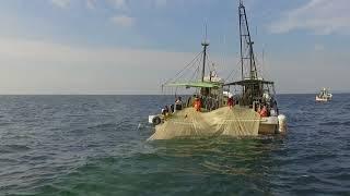 いりこ漁(香川県観音寺市伊吹島)