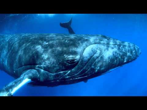 Humpback Whales in Fernbank's IMAX Theatre