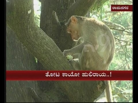 Farmers in Ramnagara Come Out With a New Idea to Control Monkeys Entering Their Farms