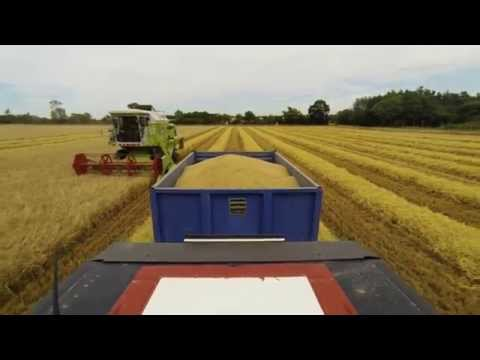 2015/08/02 - Harvesting Winter Barley - Small-scale Arable Farming