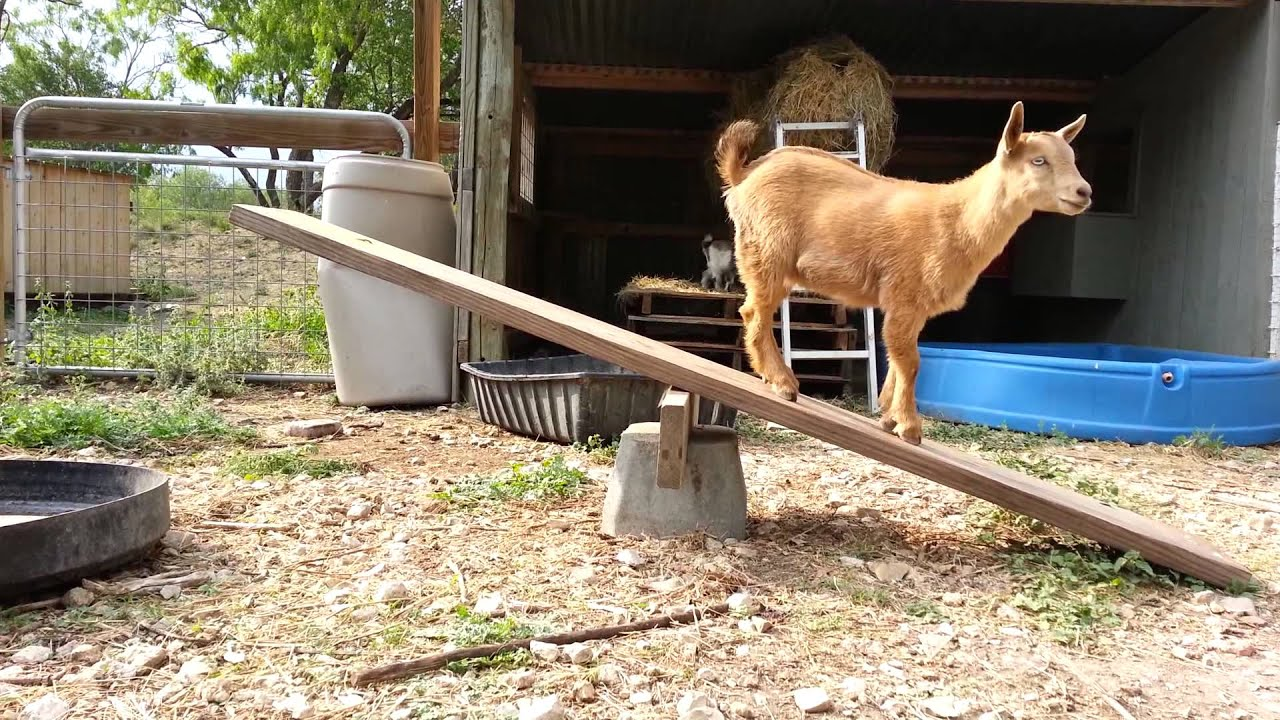 Simple Playground Equipment For The Goats YouTube