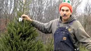 Christmas Trees at Giamarese Farm.m4v
