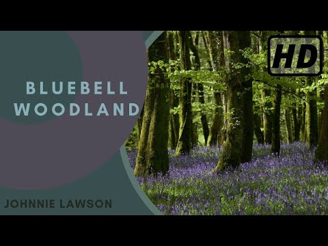 Relax with 1 hour of Soothing Nature Sounds from the Forest in Full HD-Birds Singing