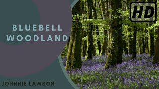 Repeat youtube video Relax with 1 hour of Soothing Nature Sounds from the Forest in Full HD-Birds Singing