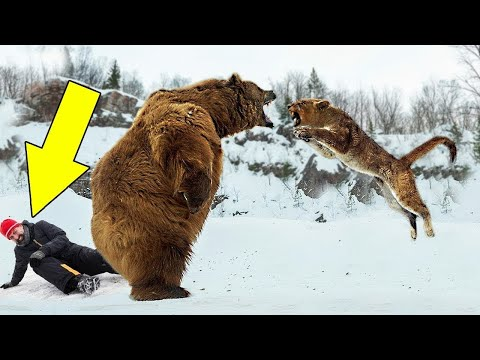 10 Wild Animals That Saved Peoples Lives!