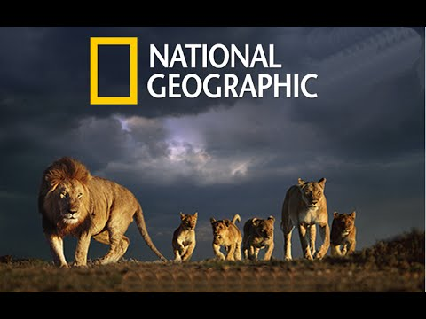 The Language Of The Lion (National Geographic)