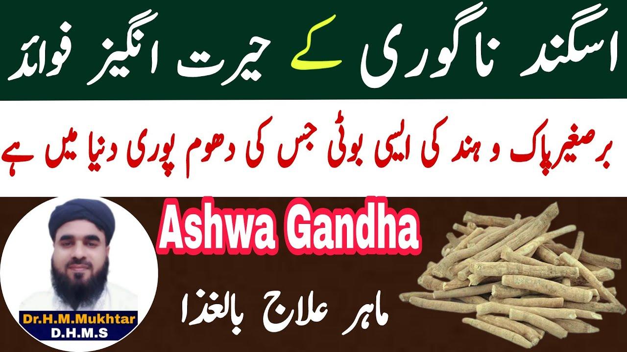 Download Asgandh Nagori (AshwaGandha) ke fayde in Urdu/Hindi Dr Muhammad Mukhtar Qadri