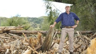 Logging Debris A Threat To Bridges
