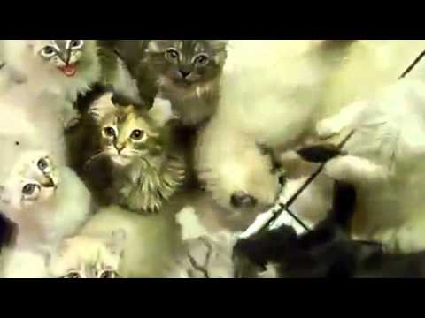 Cat lover feeding 100 Cats plus 100 of cute meows