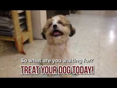 dog-food-dog-treat-funny-watch-to-end---hilarious